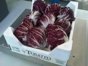 Radicchio Rosso Tosatto