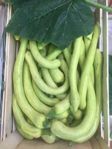 Zucchine lunghe